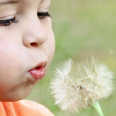 Child blowing a dandelion seeds into the air.